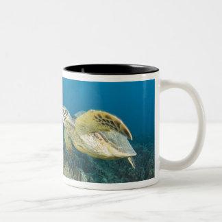 The Green Sea Turtle, (Chelonia mydas), is the 3 Two-Tone Coffee Mug