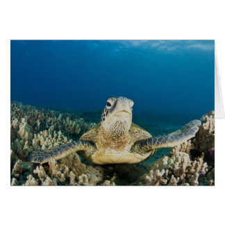 The Green Sea Turtle, (Chelonia mydas), is the Card