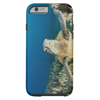 The Green Sea Turtle, (Chelonia mydas), is the Tough iPhone 6 Case