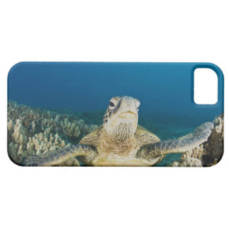 The Green Sea Turtle, (Chelonia mydas), is the iPhone 5 Cases