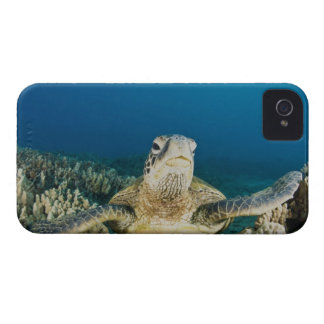 The Green Sea Turtle, (Chelonia mydas), is the iPhone 4 Cover
