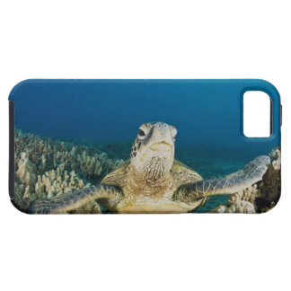 The Green Sea Turtle, (Chelonia mydas), is the iPhone SE/5/5s Case