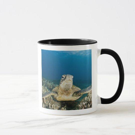 The Green Sea Turtle, (Chelonia mydas), is the Mug
