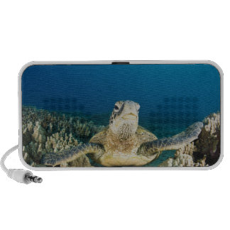 The Green Sea Turtle, (Chelonia mydas), is the Portable Speaker
