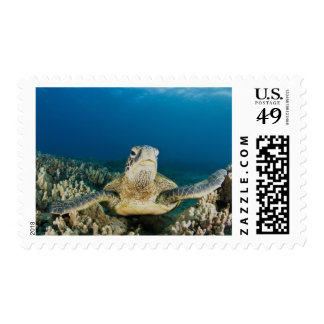 The Green Sea Turtle, (Chelonia mydas), is the Postage