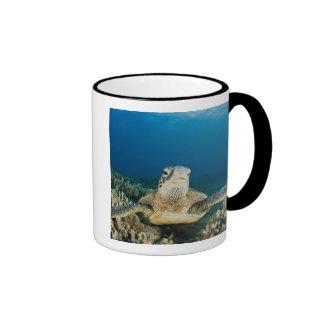 The Green Sea Turtle, (Chelonia mydas), is the Ringer Mug
