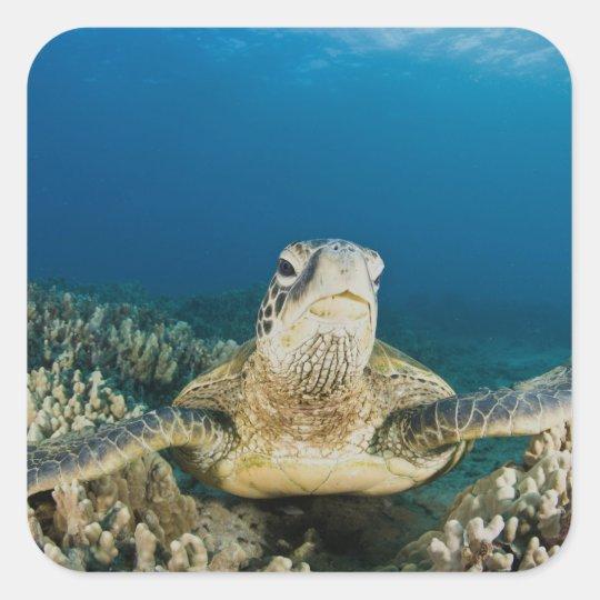 The Green Sea Turtle, (Chelonia mydas), is the Square Sticker