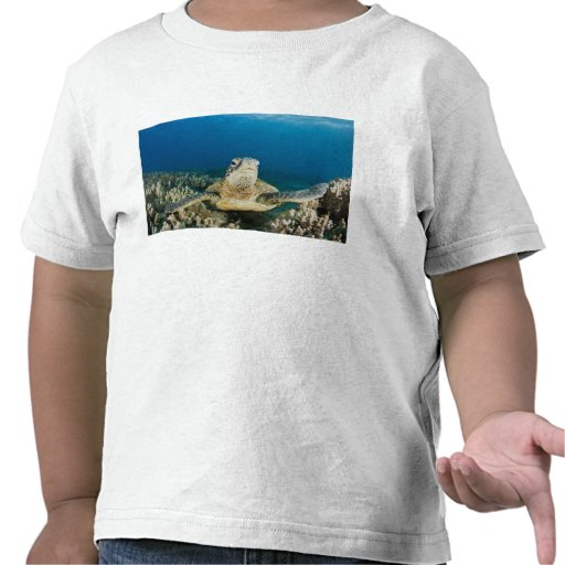 The Green Sea Turtle, (Chelonia mydas), is the Shirts