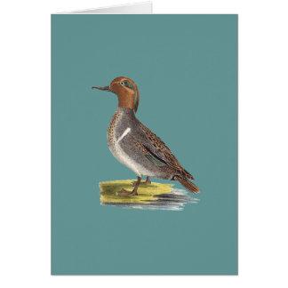 The Green-winged Teal(Anas carolinensis) Greeting Card