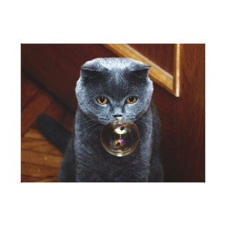 The grey cat British breed with large yellow eyes Canvas Print