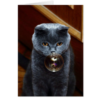 The grey cat British breed with large yellow eyes Card