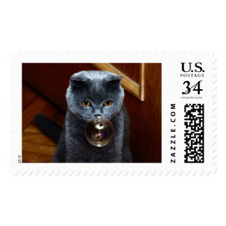 The grey cat British breed with large yellow eyes Postage