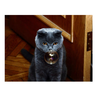 The grey cat British breed with large yellow eyes Postcard