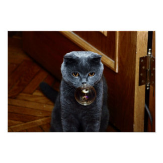 The grey cat British breed with large yellow eyes Poster