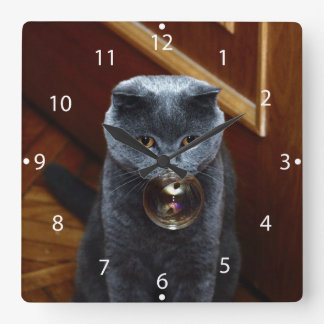 The grey cat British breed with large yellow eyes Square Wall Clock