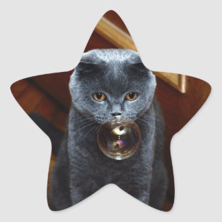 The grey cat British breed with large yellow eyes Star Sticker