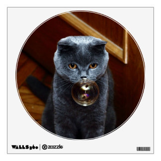 The grey cat British breed with large yellow eyes Wall Decal