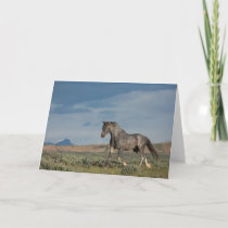 """""""The Grey Ghost"""" Note Card"""