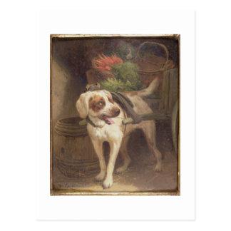 The Grocer's Dog (oil on panel) Postcard