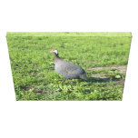 The Guinnie Hen Stretched Canvas Prints