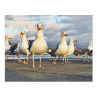 The Gull Gang Postcard