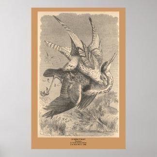 The Gyrfalcon Print