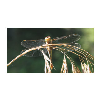 The Happy Dragonfly Canvas Prints