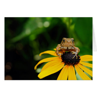 The Harbinger - Toad on Black-Eyed Susan Card