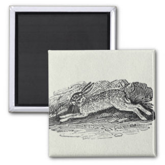 The Hare 2 Inch Square Magnet
