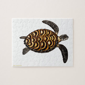The Hawksbill Sea Turtle Puzzle