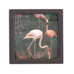 The head of a flamingo under the water premium jewelry boxes