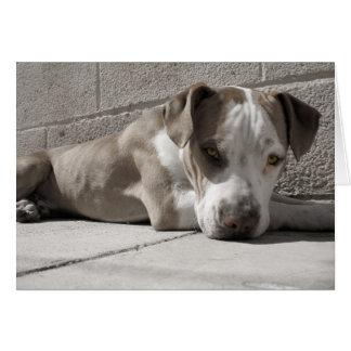 the Heart of a Bullie Dog Card