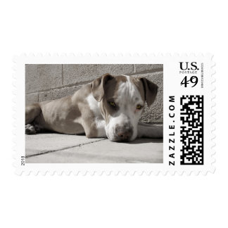 the Heart of a Bullie Dog Postage Stamps