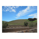 The Heart of Paso Robles Wine Country Post Cards