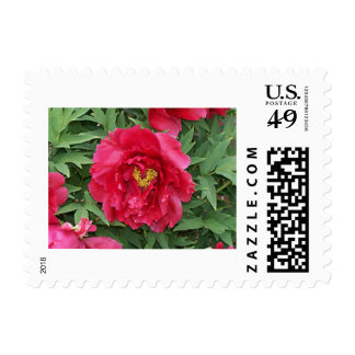 The Heart of the Peony Flower Postage