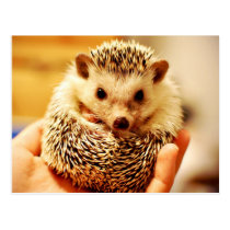 The Hedgehog Postcard