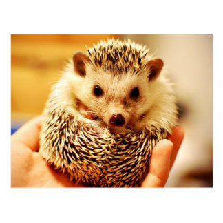 The Hedgehog Postcard