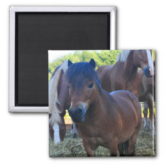 The Herdmaster Maganet 2 Inch Square Magnet