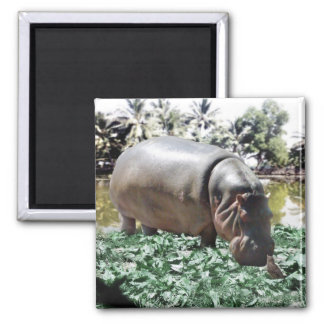 The Hippo And The Bird 2 Inch Square Magnet