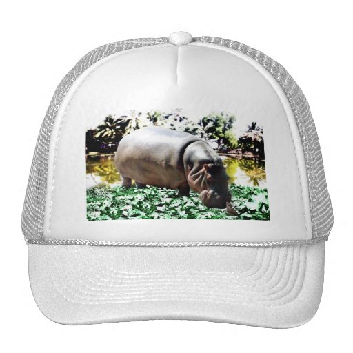 The Hippo And The Bird Trucker Hats