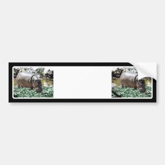 The Hippo & Bird Car Bumper Sticker