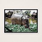 The Hippo & Bird Business Card