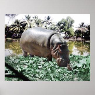The Hippo & Bird Poster
