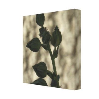 The Hollyhock Blossoms Canvas Print