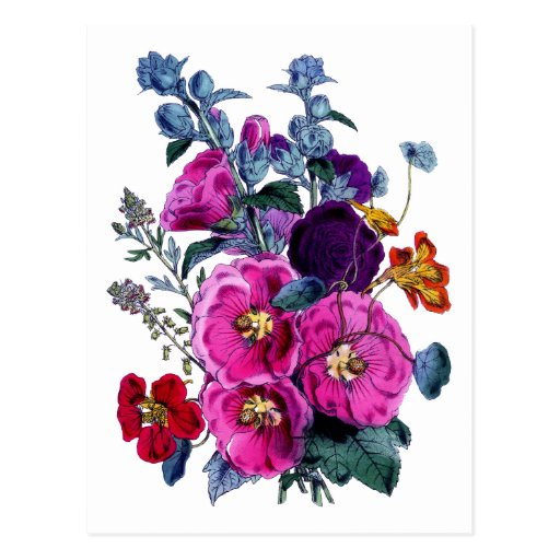 The Hollyhocks Collection Postcard
