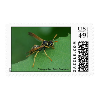 The Hornet Stamps