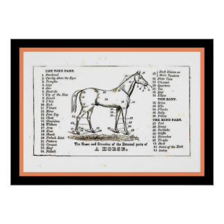 The horse diagram poster