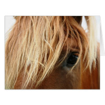 The Horse Eye Valentine Card