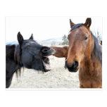The Horse Pesterer Postcard