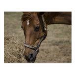 THE HORSE REFUGE POSTCARD